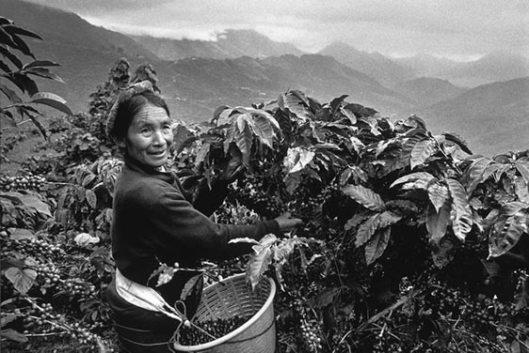 El mundo del café por sebastiao Salgado